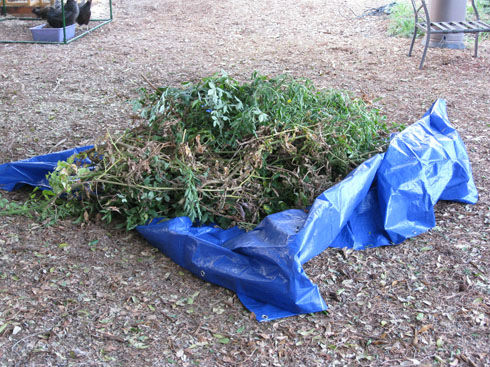 Read more about the article Ask Gardenerd: Lumpy Tomato Roots, Root Nematodes