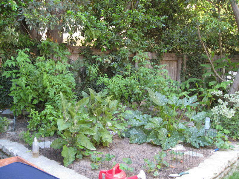 Small Backyard Vegetable Garden