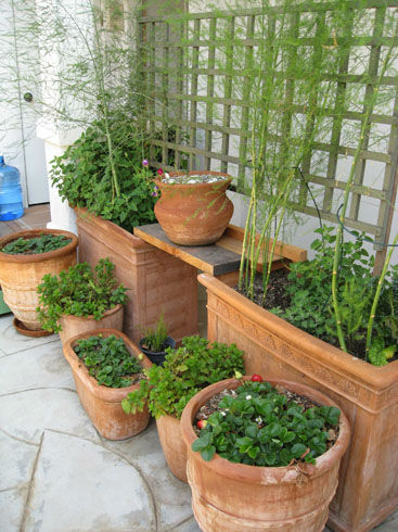 Read more about the article Ask Gardenerd: Preventing Compacted Soil in Pots