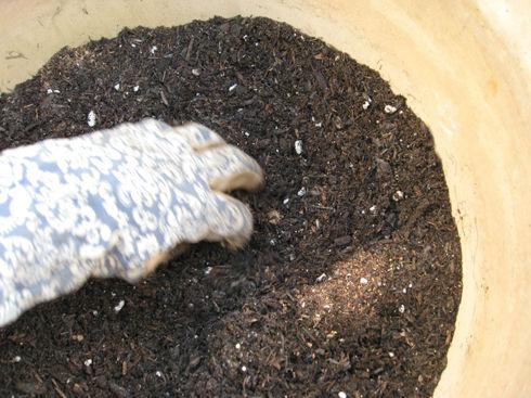 Adding fertilizers to soil.