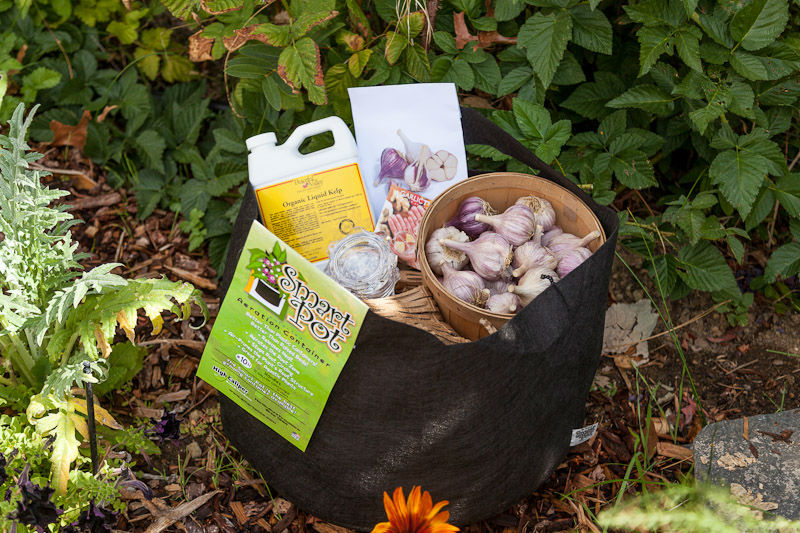 You are currently viewing It's a Garlic Planting Party – Win a Party Prize Package!