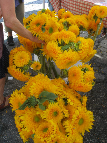 Cheerful flowers for a sunny day.