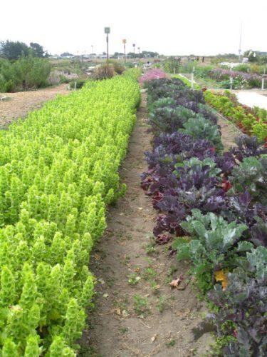 Read more about the article Field Trip: Natural Bridges Farm