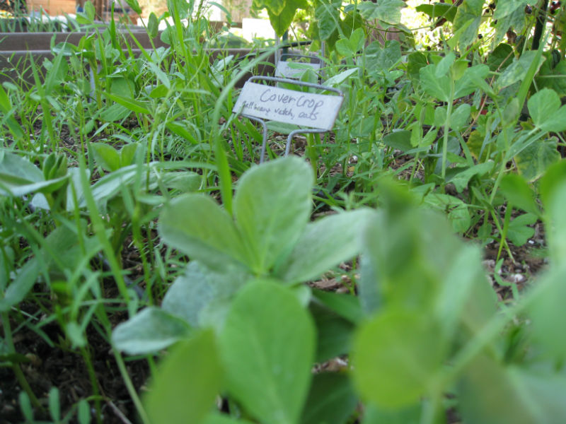 Read more about the article New Year's Garden Resolutions 2015
