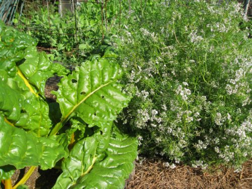 Read more about the article Fall Garden in Progress – Part 2