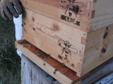 New home for bees