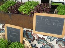 Silver Lake Farms Micro-greens