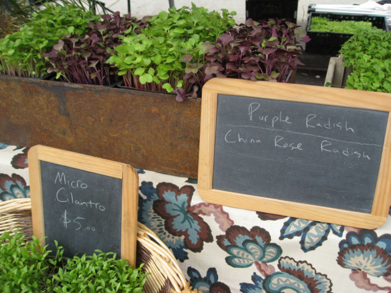 Read more about the article Micro-Greens for All