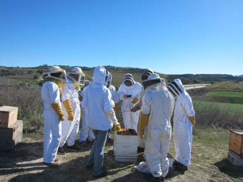 Read more about the article Field Trip: A Visit to a Bee Sanctuary