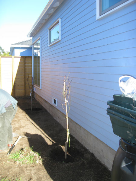 Bare root fruit trees will bloom and grow this spring.