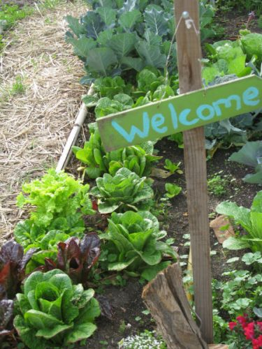 Read more about the article I am Planting a Garden, by Heidi Rose