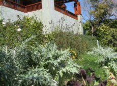 Linda's husband, Richard's recording studio overlooks a slope of rosemary, fruit trees and artichokes.