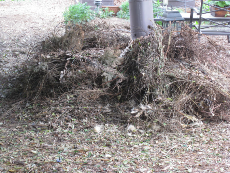 Biomass to be shredded - our carbon ingredient