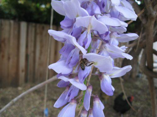 Read more about the article Ask Gardenerd: Pollinator Garden Density