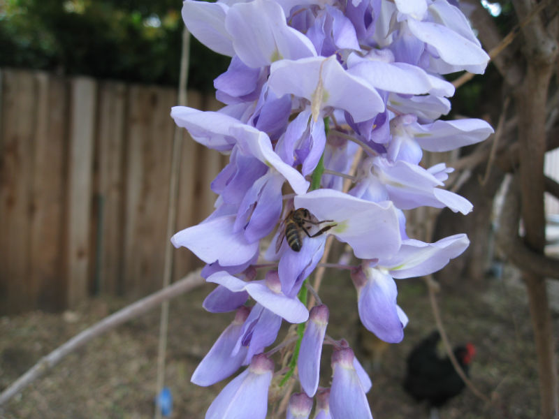 You are currently viewing Ask Gardenerd: Pollinator Garden Density