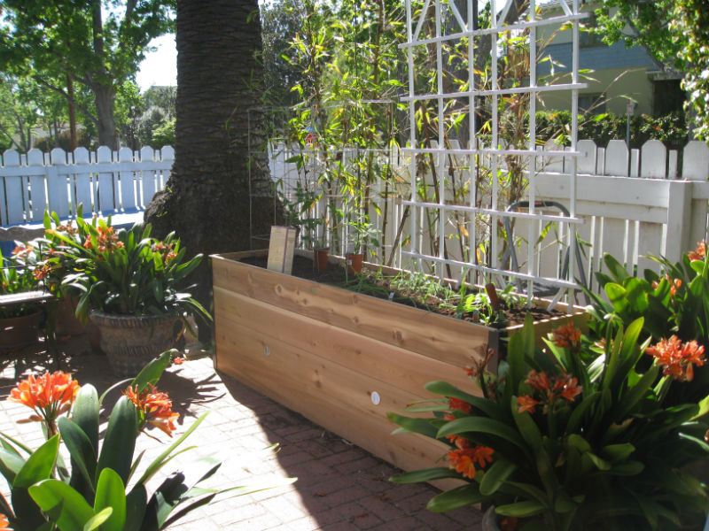Raised Bed planter (getting 10 minutes of shade from the palm tree overhead)