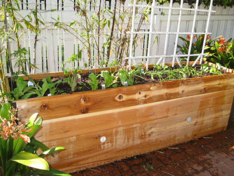 New garden veggies