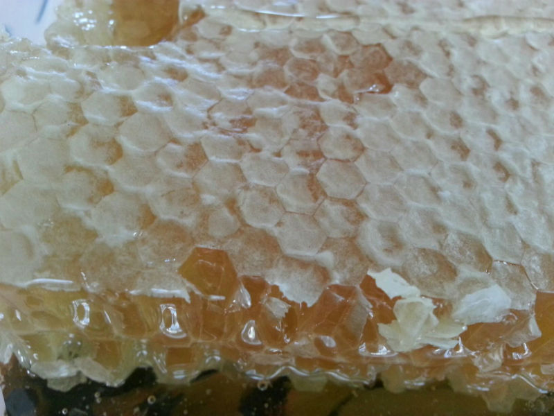 Read more about the article Oh Sweet Goodness: First Honey Harvest