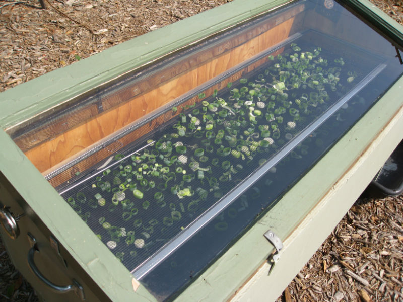 Green Onions drying in the solar food dryer