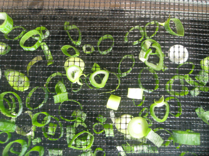 2 layers of green onions drying out