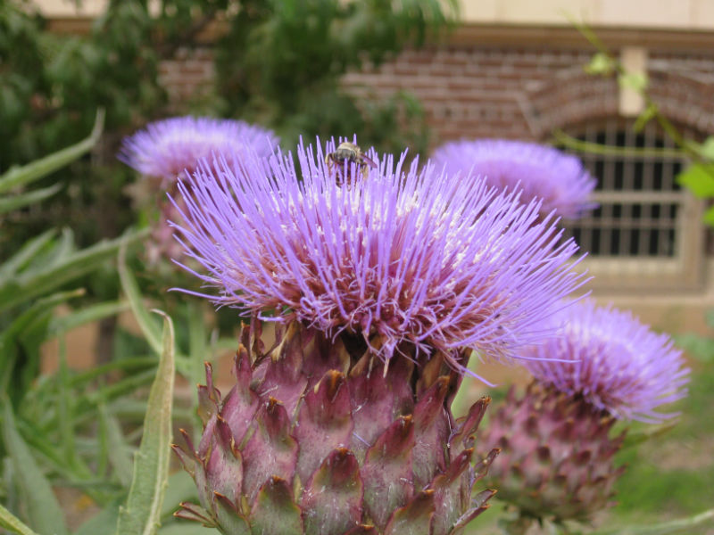 Read more about the article YouTube: Wildflowers for Bees