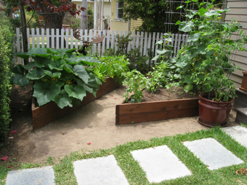 A thriving garden in a small space