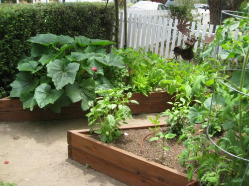 Read more about the article Tiny But Mighty Venice Garden Makeover