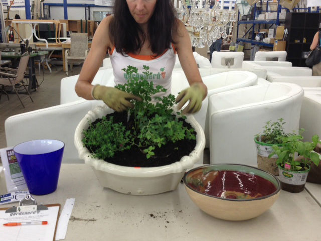 Even the kitchen sink is great for planting