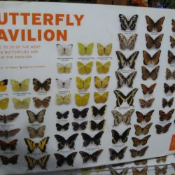 A handy chart helps you identify the butterflies