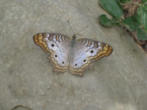 Read more about the article Field Trip: Butterfly Pavilion