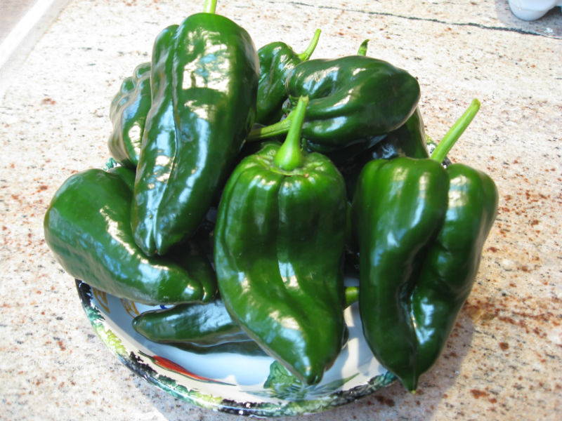 You are currently viewing Recipe: Home Grown Chili Fries (Poblano Pepper Poppers)