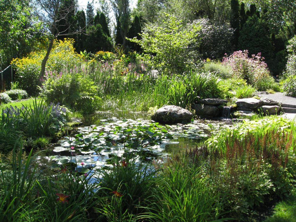 Water plants and lush grasses surround the trickling stream