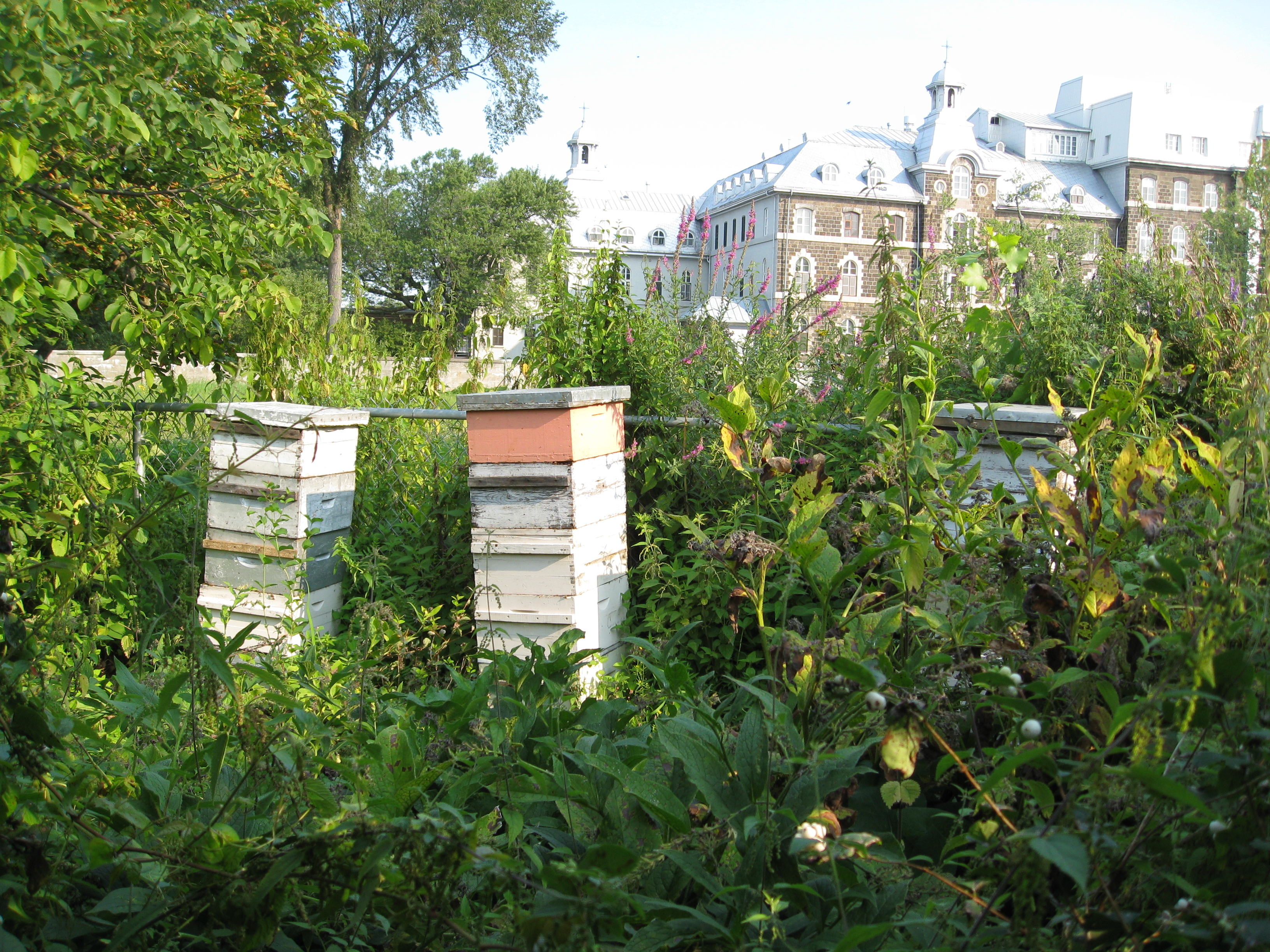 3 hives help pollinate the garden