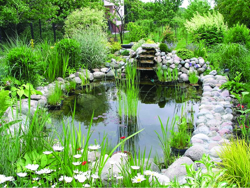 A simple guide to digging a sustainable garden pond for Easy backyard pond