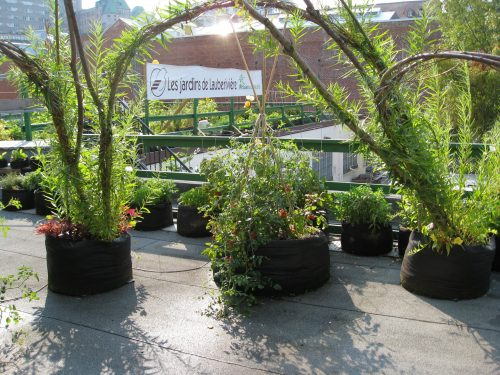 Read more about the article Field Trip: Quebec City Rooftop Garden – Les Jardins des Lauberiviere