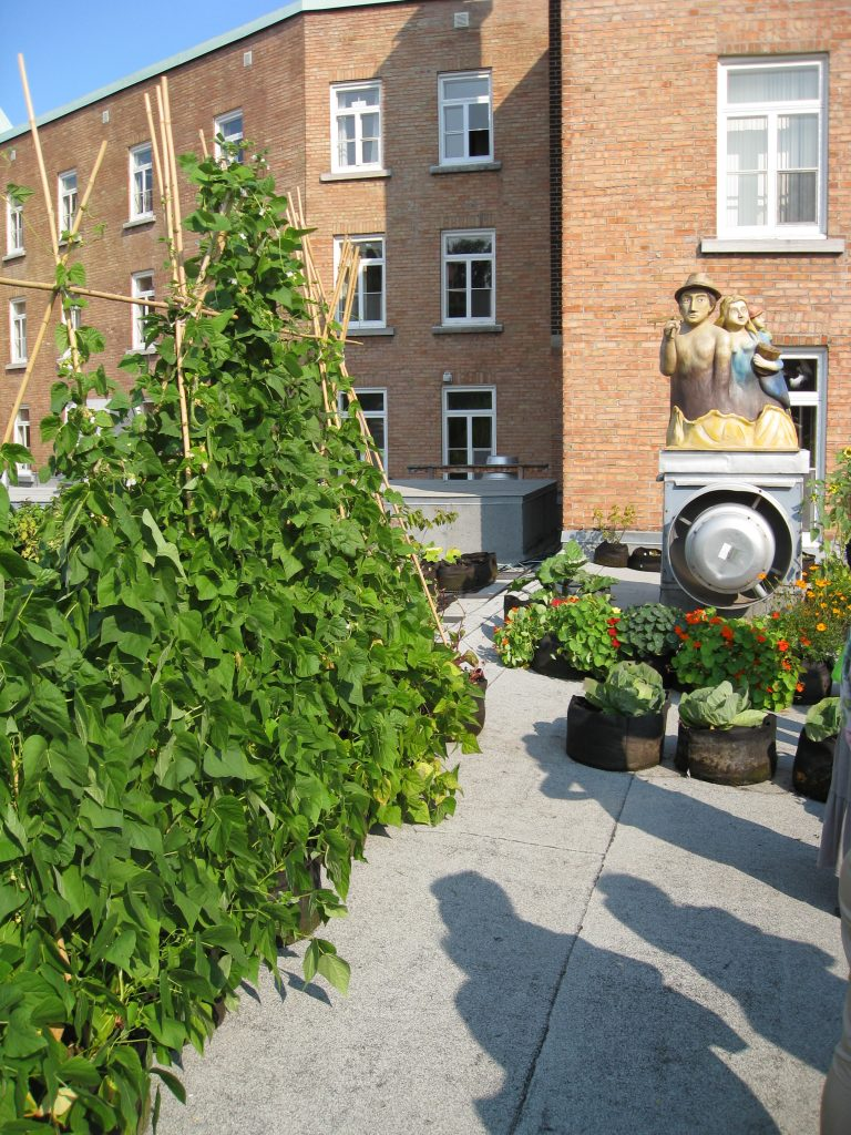 Beans in Smart Pots grow tall with bamboo trellises nearby a watchful sculpture.