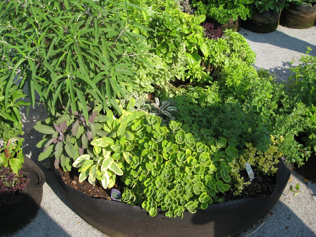 An oversized pot holds a bounty of herbs