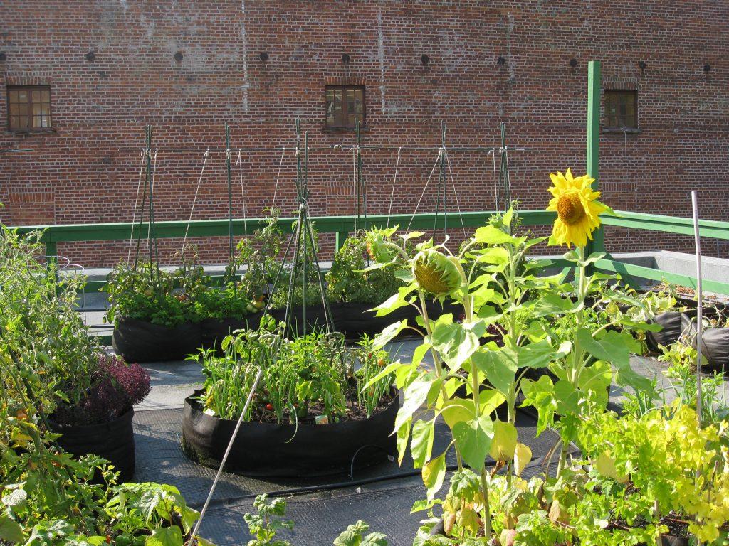 Sunflowers against the brick wall says it all.