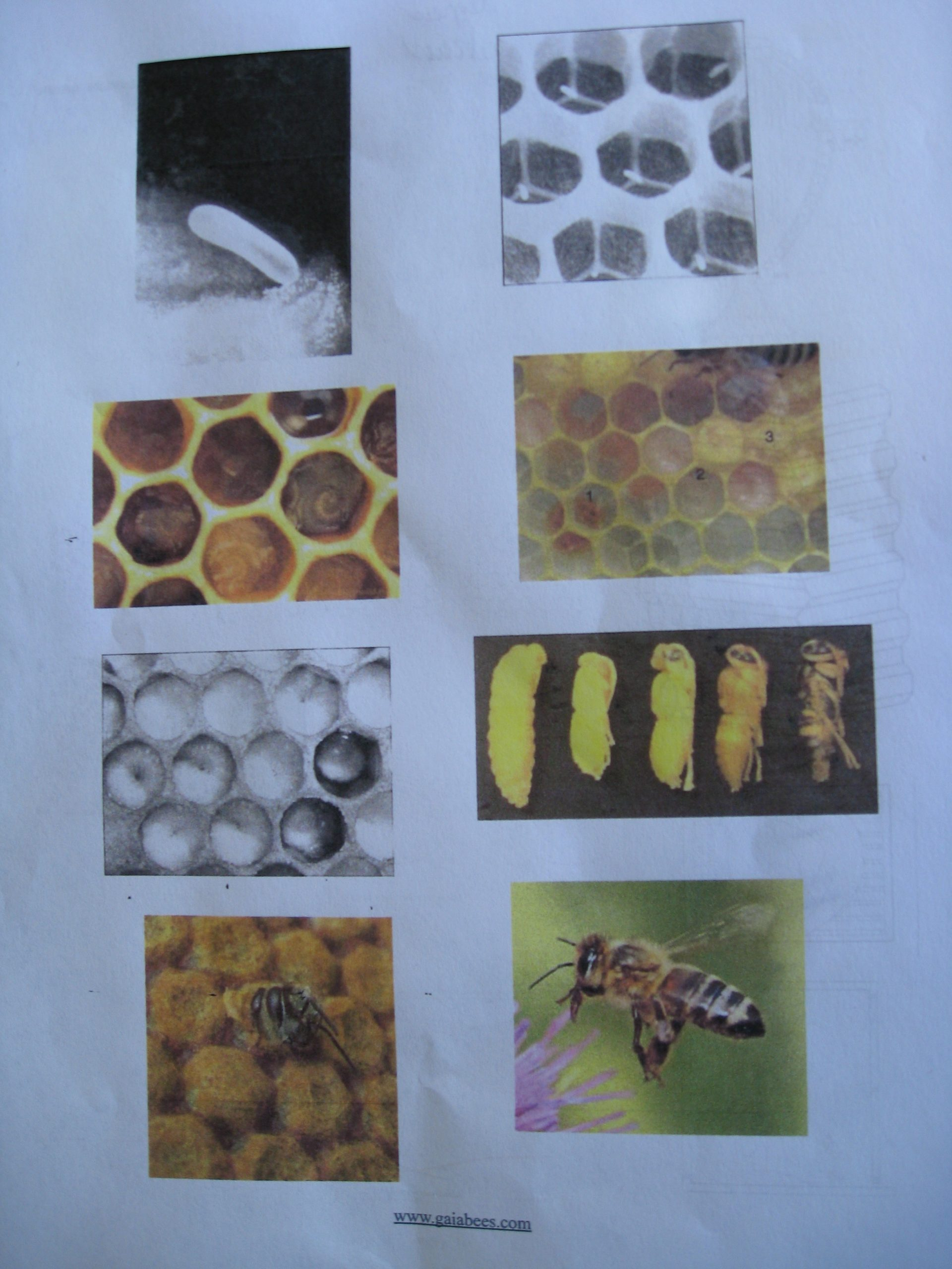 Read more about the article Biodynamic Beekeeping with Michael Thiele