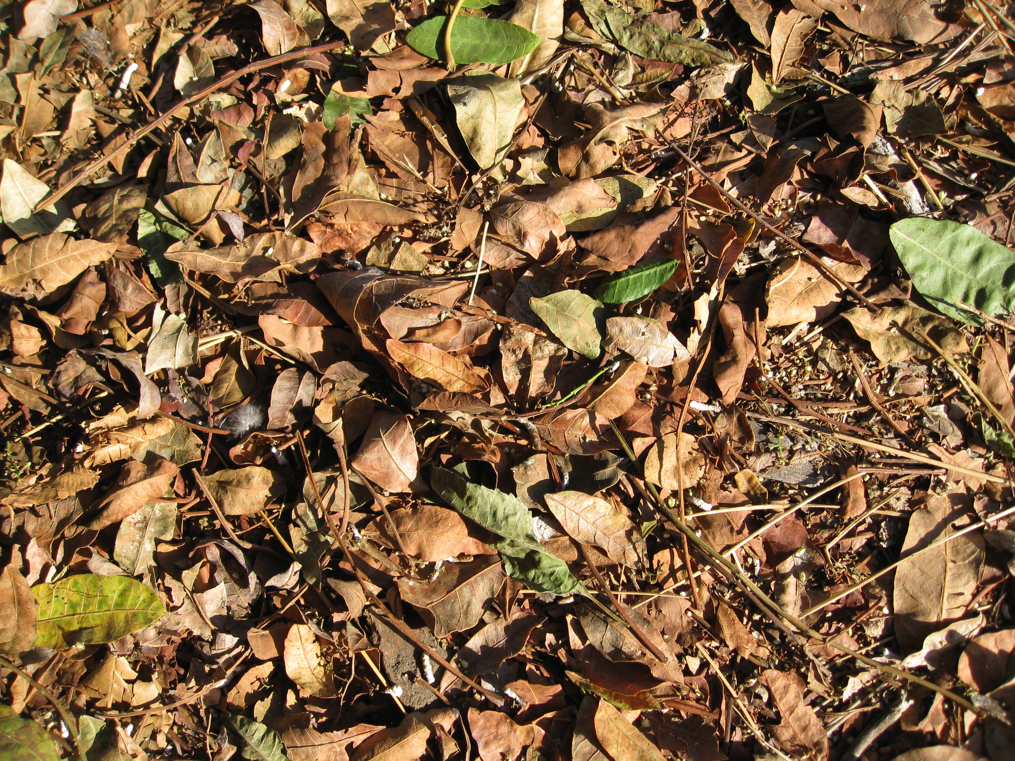 Dried tree leaves make good compost material