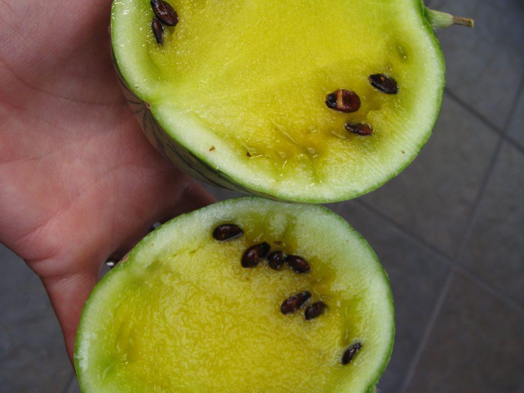 Bright yellow flesh redeems this tiny watermelon
