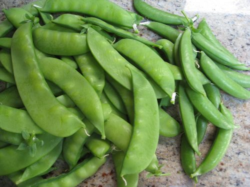 Read more about the article Tips to Freeze What You Grow