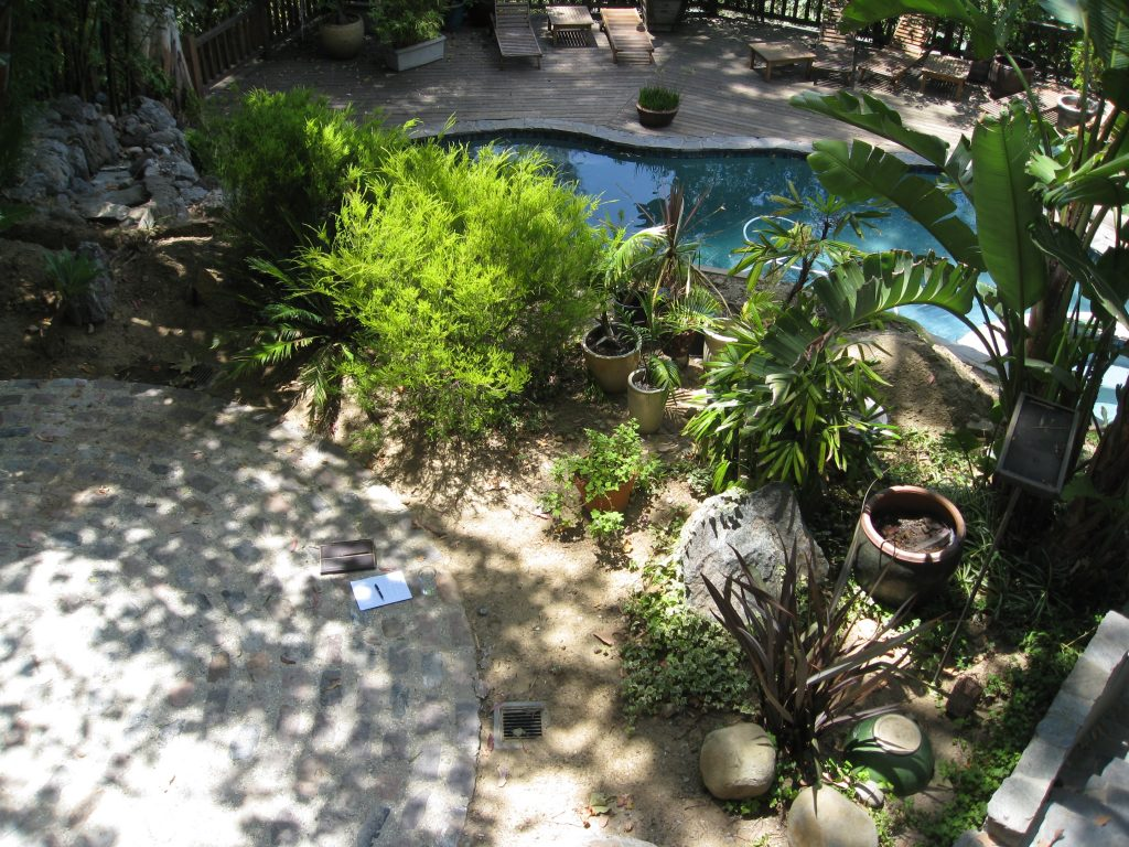 Circular patio with plants to be cleared for our new garden.