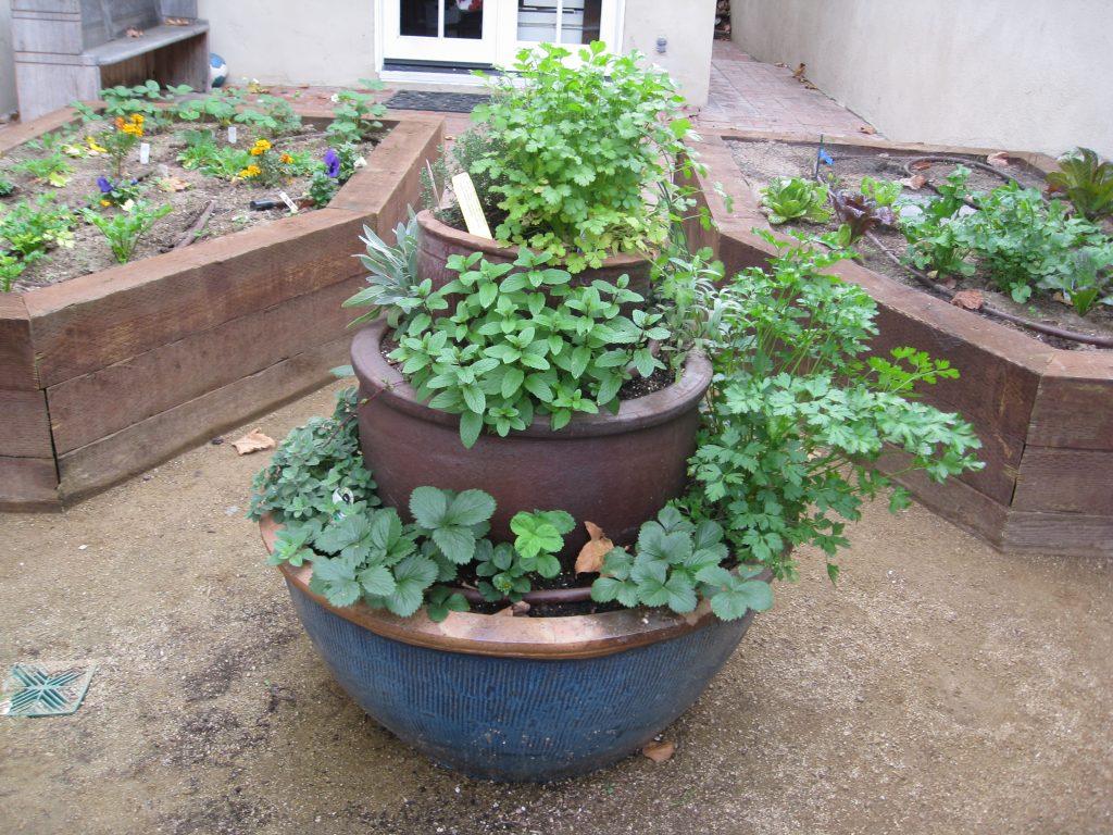 A client's herb garden is going strong