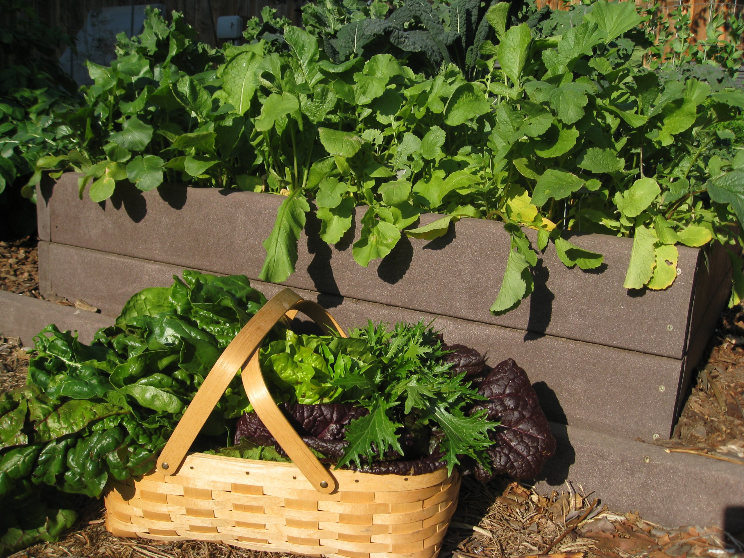 Read more about the article Podcast: Fall Gardening Tips with Gardenerd