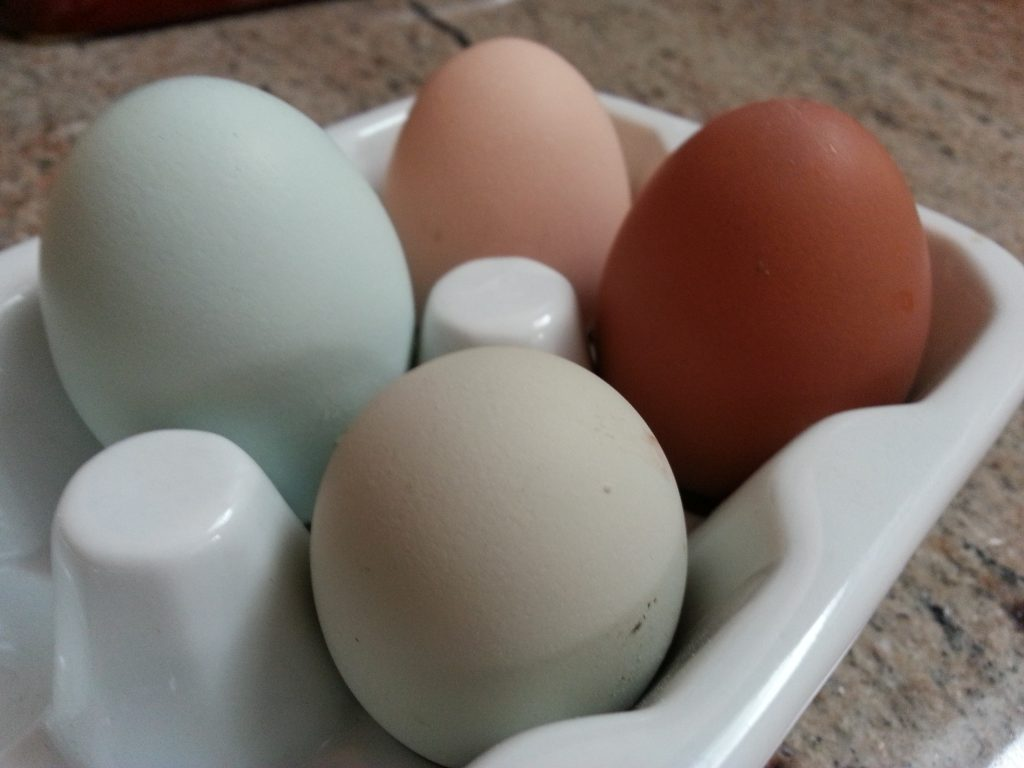 Our first 4-egg day. Photo by Andrew Cheeseman