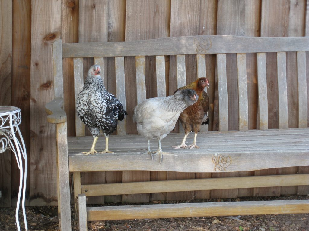 Sylvia, Anabelle and Wilma make themselves at home.