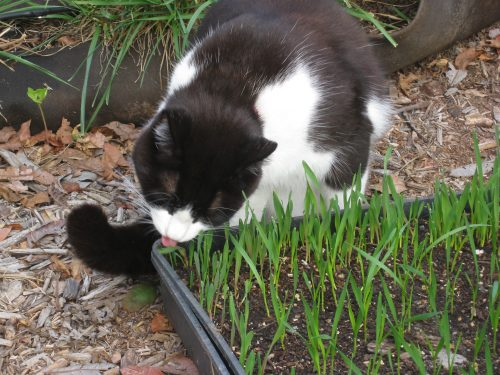 Read more about the article Ask Gardenerd: Cats in my Garden