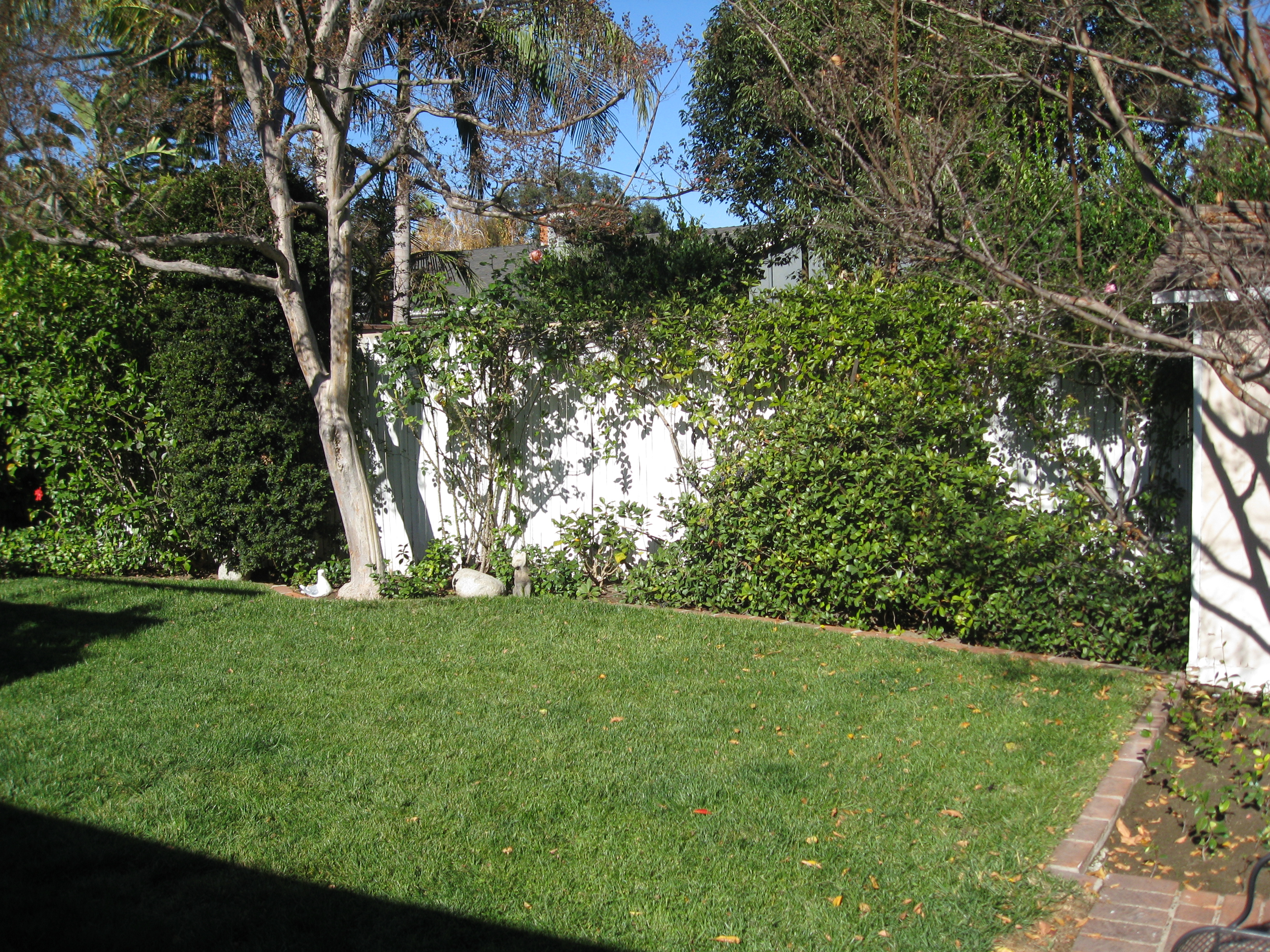 Grass and foliage take up the sunniest spot in the garden.