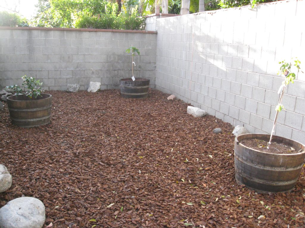 3 fruit trees shown here with three more on the concrete behind.